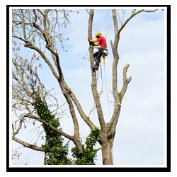 Arborist i träd