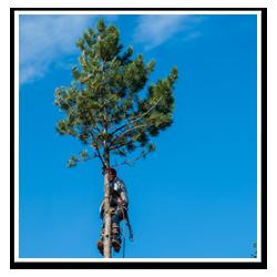 Professionell trädfällare