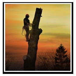 Trädfällaren